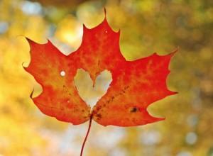 152216__leaf-maple-heart-heart-autumn-close-up_p
